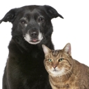 old-dog-and-cat-1205petsenior