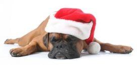 sleeping-christmas-dog